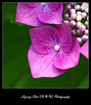 Unknown flower-6