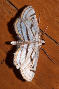 Sept. 18, 2011 - Moths-part 2