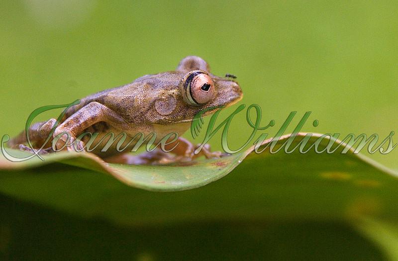 _P1E9231#3 Frog.jpg