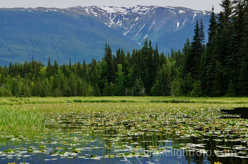 Bonus Lake Rec Site