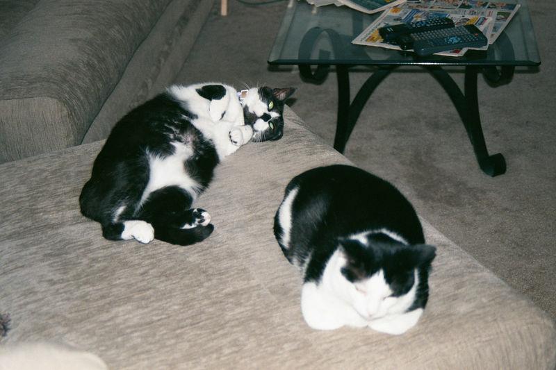 2001 08b - Cats at old apt 30.JPG