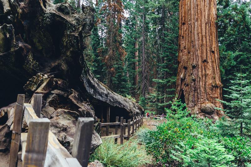 Rui in Sequoia-06951.jpg