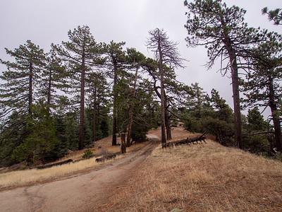 Thomas Mountain via the Ramona Trail  12.5.14