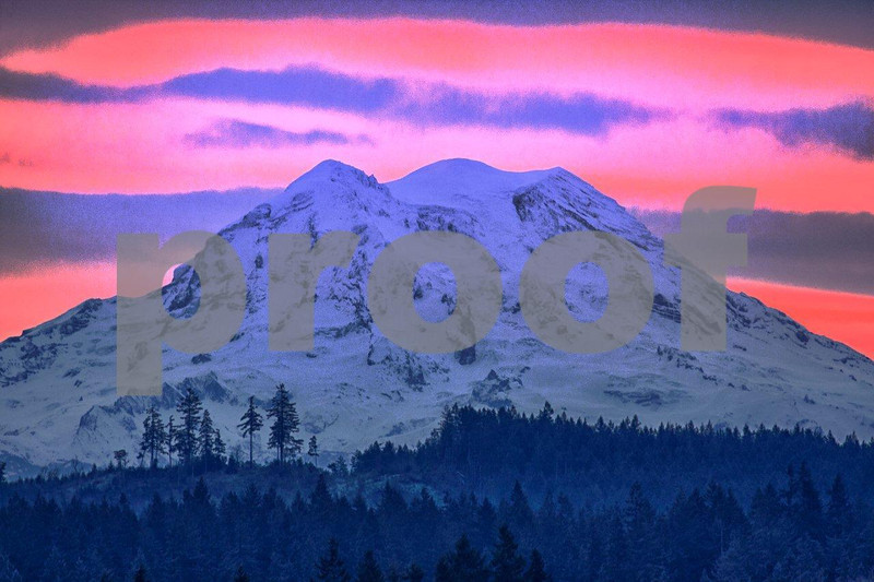 Mt. Rainier rises above a forest landscape on a winter morning just before sunrise. 4691