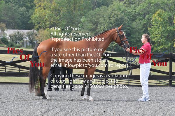 Holsteiner Inspection at Hyperion Farm - Sept 8, 2010