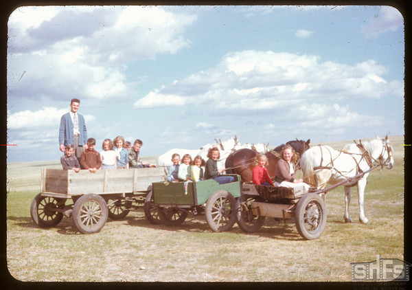Heading home from school by horse and wagon.  Rosefield.  05/09/1951