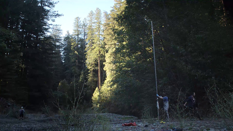 Bat Research in the Redwoods