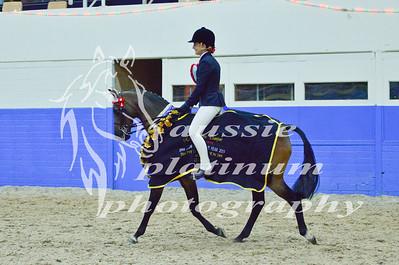 Class 15 Lrg Show Pony 13-14hh