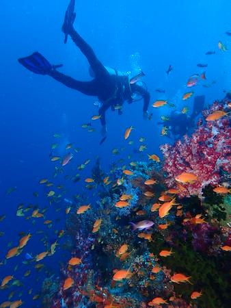 2016 Volivoli Underwater 5