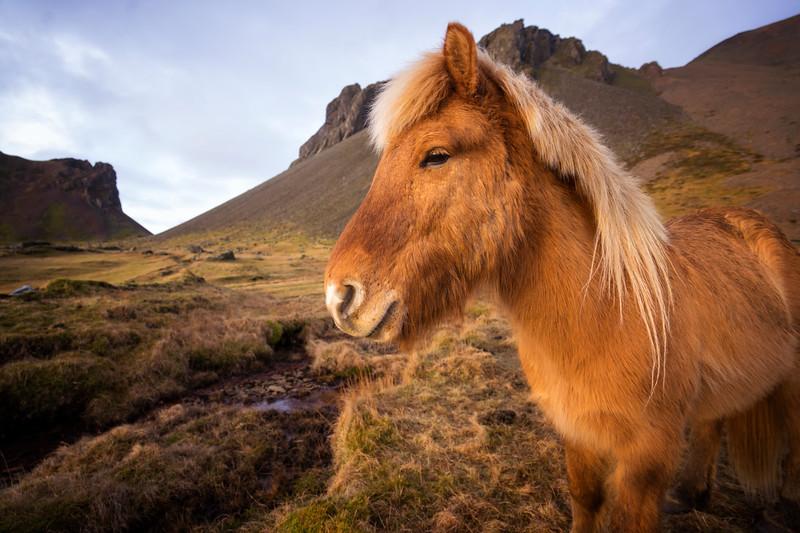 horseiniceland.jpg