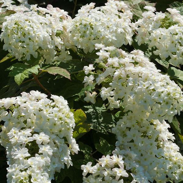 2009 06 30_NY Botanical Gardens_0676_edited-1.jpg