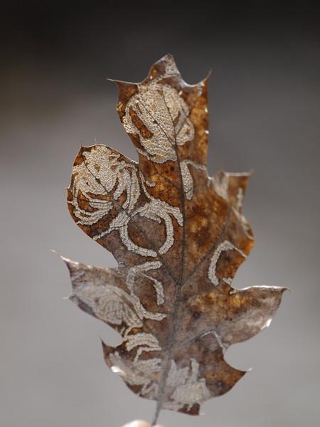Leaf Art 2