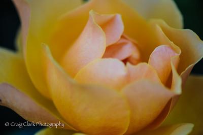 Rose Garden 6-4-13