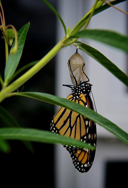 2013-3-16 | Monarch