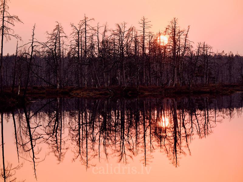 Skaista ezers pavasarī