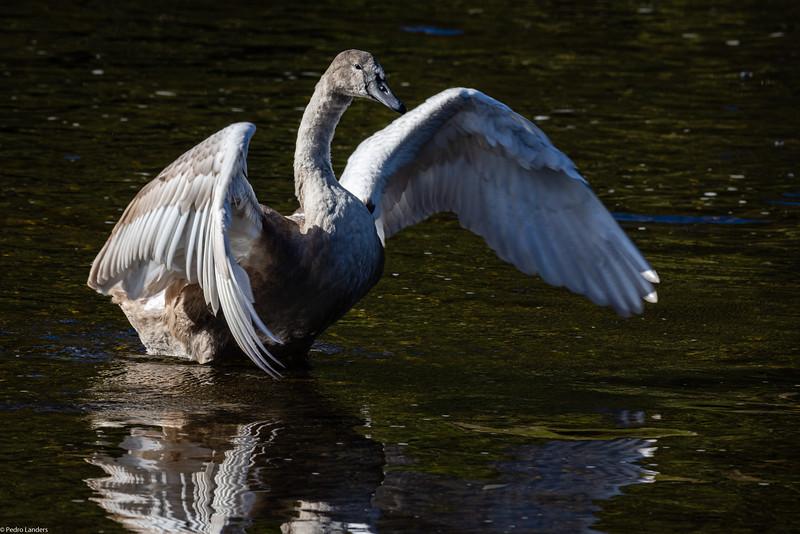 Spreading My Wings.jpg