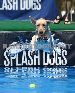 Splash Dog CVI 2013