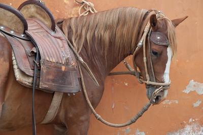 Peru, Peruvian Horse Ranch