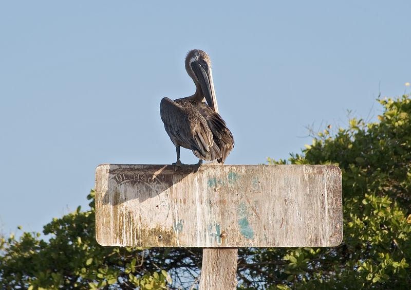 Pelican on beach sign   (Dec 09, 2005, 04:29pm)