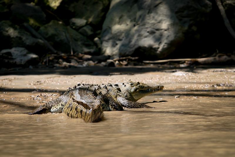 Crocodilo 20010.jpg