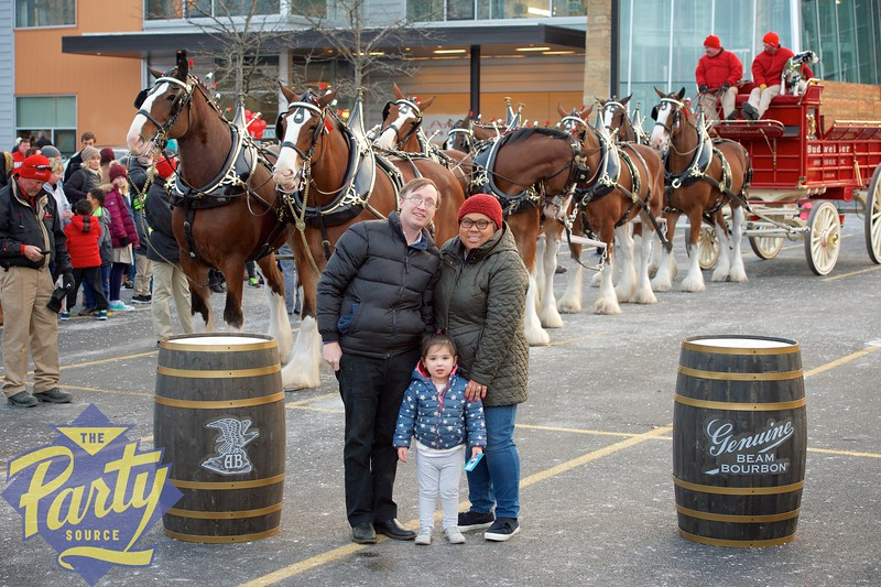 Clydesdale Portraits 338.jpg