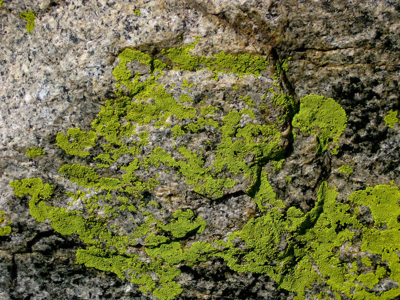 Green lichens on the marble.