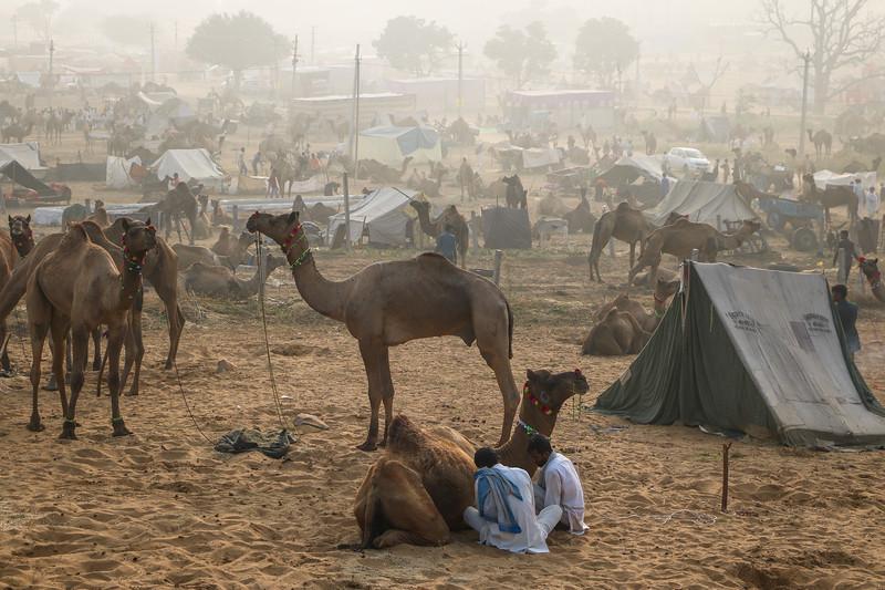 India-Pushkar-2019-8614.jpg