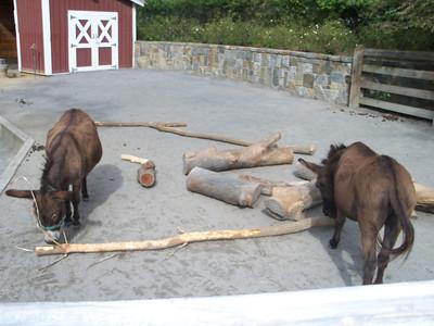 Washington DC Zoo