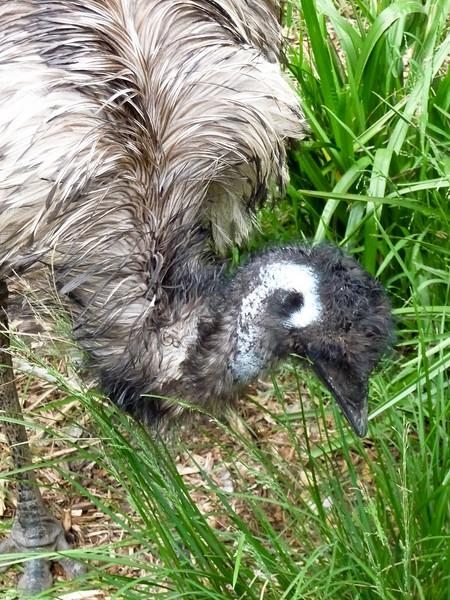 Healesville - Wildlife Preserve