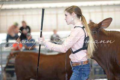 Open Cattle Ringshots - 1