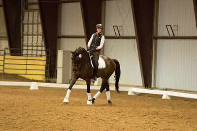 Horse 552