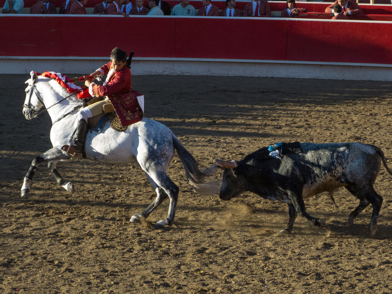 A very fast and feisty bull for Cavaleiro Luis Rouxinol and his Lusitano. He comes very close to the horse many times.
