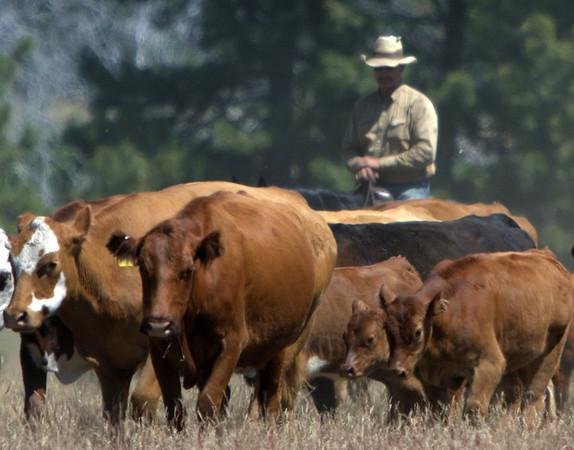Kelley Cattle Co. Roosevelt Wa