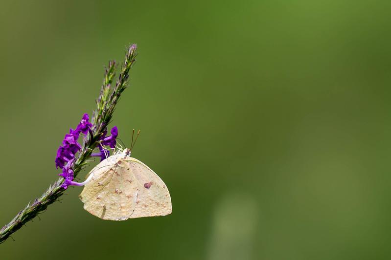 kaila_drayton_photography-1364.jpg