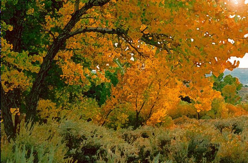 golden glow 11-2-2007.jpg