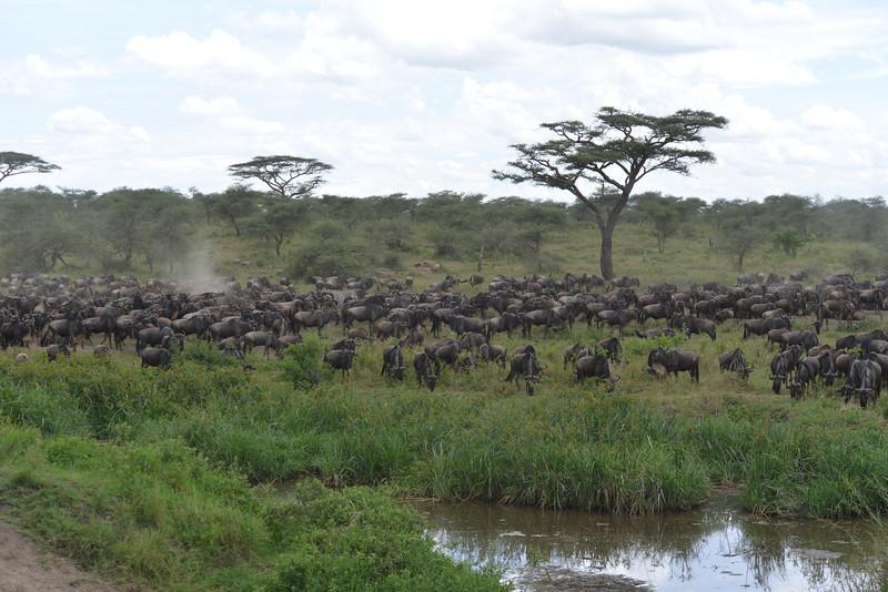 East Africa Safari 265.jpg