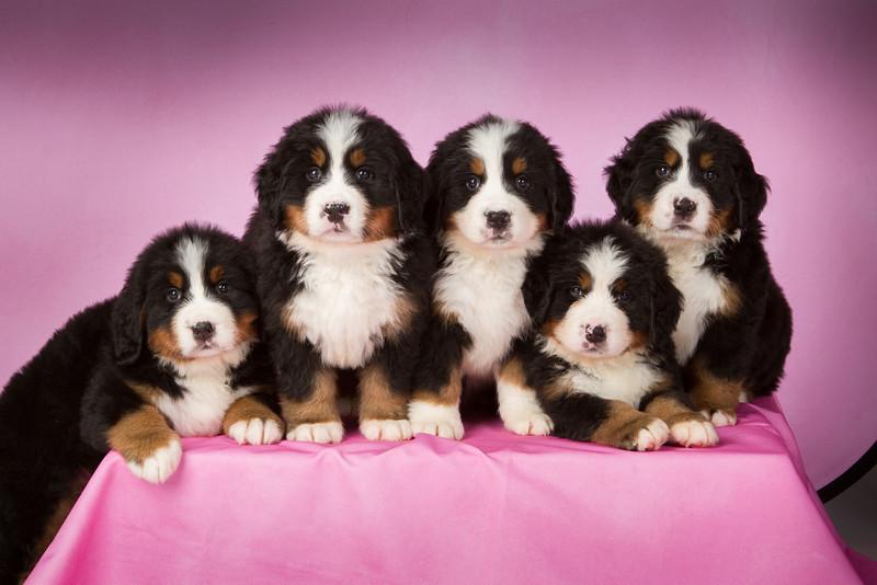 2013-Pearson Pups-Jun02-0300-2.jpg