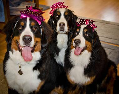 Kathie's Birthday 2011 in Napa