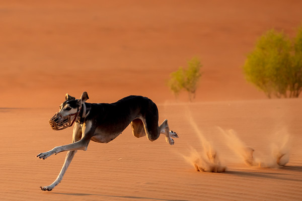 UAE 2018 Quasr Al Sarab Desert Hunt