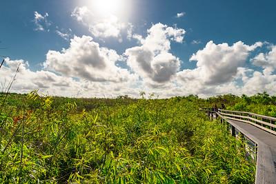 03-11-19 Everglades 1