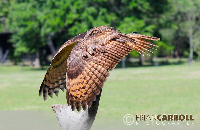 MMG Birds_of_Prey_2012_3.jpg