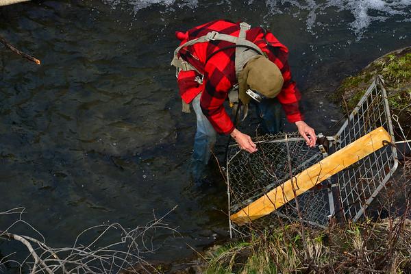 Saving a beaver - 041421
