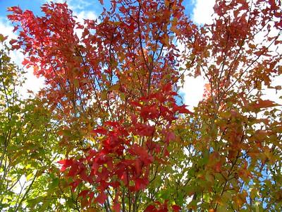 Autumn Fall Wallpaper