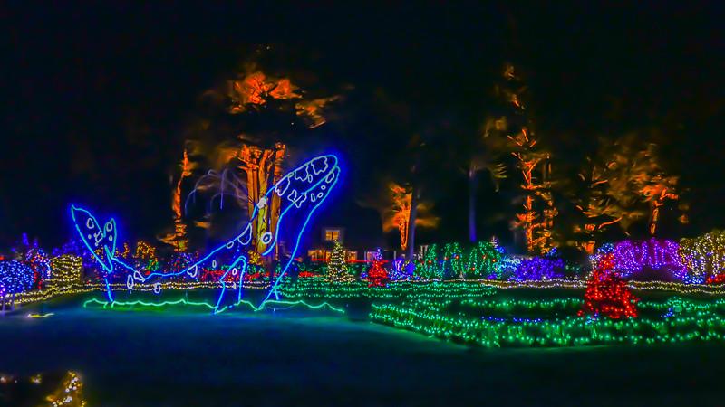 12-05-2019 Shore Acres Christmas Light Show (22 of 55).jpg