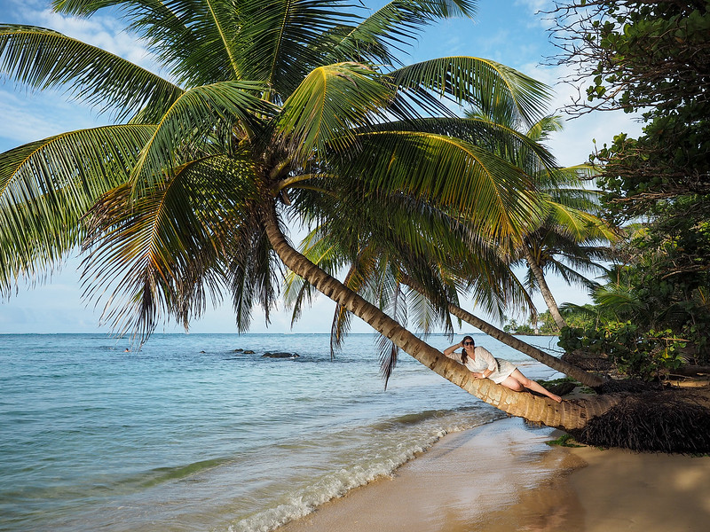 Palm tree on Little Corn Island