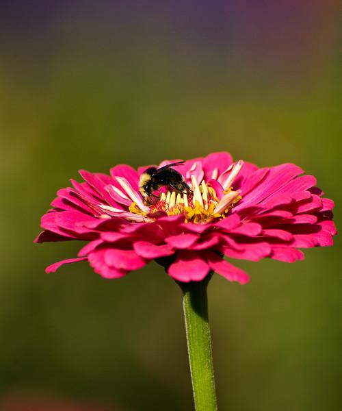 Bee delighted - The Oregon Garden