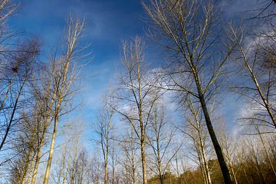 Dans les bois de Villers-la-Ville par une belle journée d'hiver