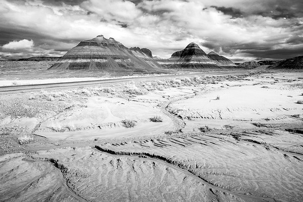 Petrified National Forest B&W