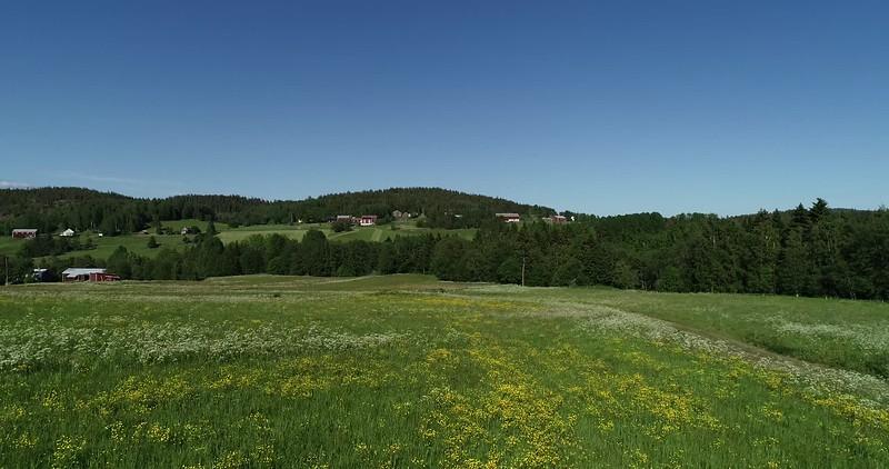 Aerial: flying over flowering meadows in spring towards a gravel road