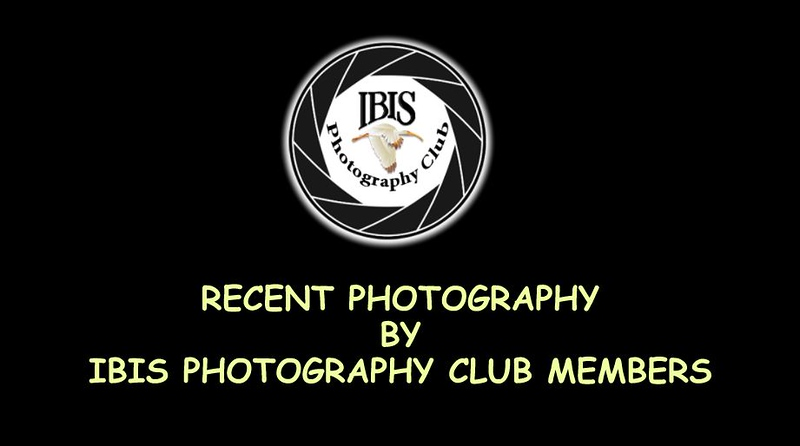 Video Slideshow of IPC Member Photography - 2018